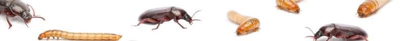 Stakeholdersmeeting insecten Officiële opening nieuwe onderzoeksruimtes voor insectenkweek